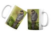 Male Sparrow Hawk FB_02_MUG