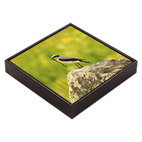 Northern Wheatear Framed Tile ZB_21_FT