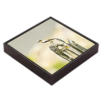 Northern Wheatear Framed Tile ZB_22_FT