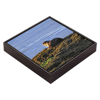 Otter Framed Tile ZB_25_FT