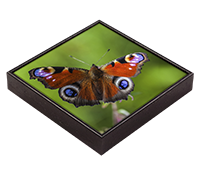 Peacock Butterfly Framed Tile  DM_02_FT