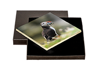 Puffin Boxed Tile ZB_56_BXTILE