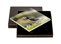 Puffin Boxed Tile ZB_57_BXTILE