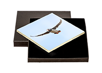 Puffin Boxed Tile ZB_60_BXTILE
