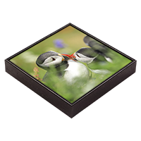 Puffin Framed Tile  ZB_07_FT