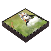 Puffin Framed Tile  ZB_08_FT