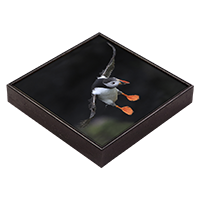 Puffin Framed Tile  ZB_09_FT