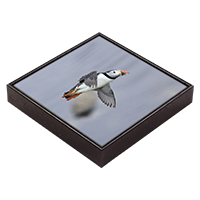 Puffin Framed Tile ZB_13_FT