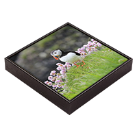 Puffin Framed Tile  ZB_17_FT