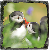 Puffin Slate Coaster ZB_07_SSC