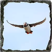 Puffin. Medium Square Slate ZB_60_MSL