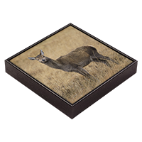 Red Deer Hind Framed Tile  ZB_31_FT