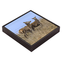 Red Deer Hind Framed Tile ZB_35_FT