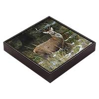 Red Deer Stag Framed Tile ZB_27_FT
