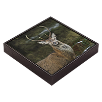 Red Deer Stag Framed Tile  ZB_28_FT