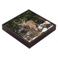 Red Deer Stag Framed Tile  ZB_29_FT