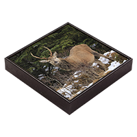 Red Deer Stag Framed Tile  ZB_30_FT