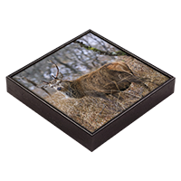 Red Deer Stag Framed Tile  ZB_36_FT