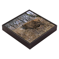 Red Deer Stag Framed Tile  ZB_37_FT