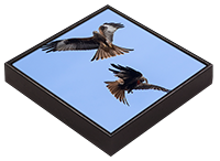 Red Kite Framed Tile  FB_05_FT