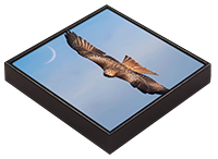 Red Kite Framed Tile  FB_06_FT