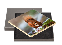 Red Squirrel Boxed Tile FB_04_BXTILE