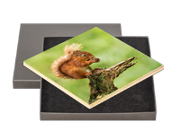 Red Squirrel Boxed Tile FB_08_BXTILE