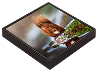 Red Squirrel Framed Tile  FB_04_FT