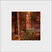 Rothiemurcus Woods Mounted Print  AS_17_MM