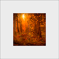 Rothiemurcus Woods Mounted Print  AS_18_MM