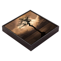 Tree In Loch Lomond Framed Tile AS_56_FT