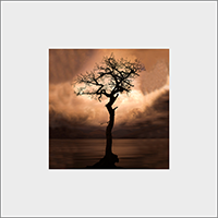 Tree In Loch lomond Mounted Print  AS_56_MM