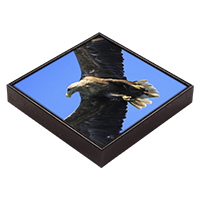 White Tailed Sea Eagle Framed Tile ZB_02_FT