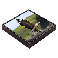 White Tailed Sea Eagle Framed Tile  ZB_19_FT